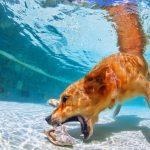 GoXtreme Action Image Dog