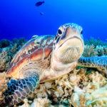 GoXtreme Action Turtle Image